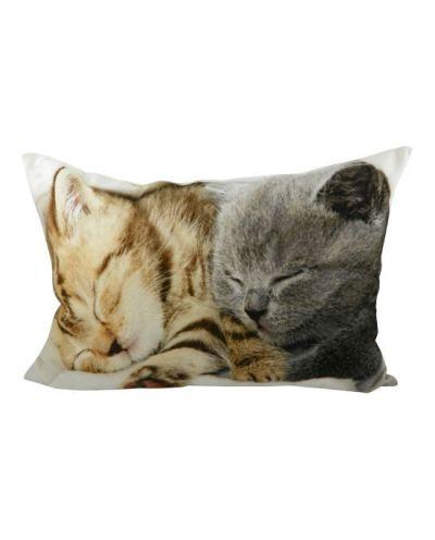 Kissen Kitten